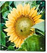 Garden Treasure  Acrylic Print
