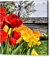 Garden Tulips On A Cloudy Day Acrylic Print