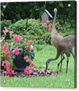 Garden Visitors Acrylic Print