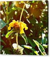 Garden Yellow Acrylic Print