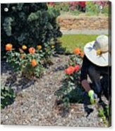 Gardener Pulling Weeds  Acrylic Print