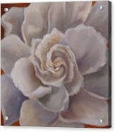 Gardenia  Bloom Acrylic Print