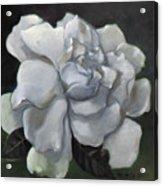 Gardenia Two Acrylic Print