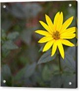 Gardening Melody Acrylic Print