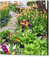 Gardens Of Tulips Acrylic Print