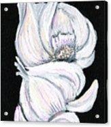 Garlic 2 Acrylic Print