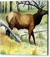 Gash Flats Bull Acrylic Print