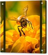 Gathering Pollen Triptych Acrylic Print