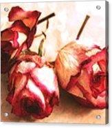 Gathering Rosebuds Acrylic Print
