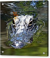 Gator And Dragonfly Acrylic Print