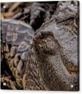Gator Eye Acrylic Print