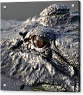 Gator Gaze Acrylic Print