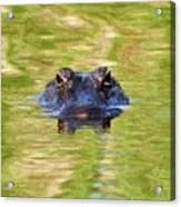 Gator In The Green - Digital Art Acrylic Print