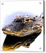 Gator Profile Reflection Acrylic Print