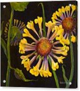 Gaylordia Acrylic Print