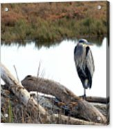 Gbh On Log Acrylic Print