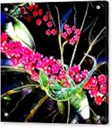 Gecko Berry Acrylic Print