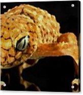 Gecko - Id 16218-130646-3343 Acrylic Print