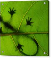 Gecko On A Leaf Acrylic Print
