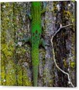 Gecko On Tree Bark Acrylic Print