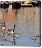 Gees And Goslings 2 Acrylic Print