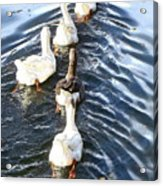 the Geese are leaving Acrylic Print
