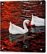 Geese At Lady Bird Lake Acrylic Print by Mark Weaver