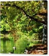 Geese By Pond In Autumn Acrylic Print