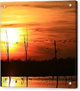 Geese Flying Into The Sunset Acrylic Print