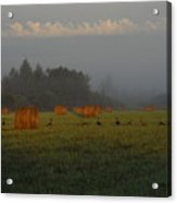 Geese In A Foggy Hay Field Acrylic Print