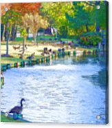 Geese In Pond 3 Acrylic Print