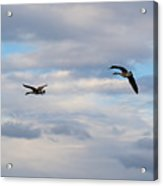 Geese In The Clouds Acrylic Print