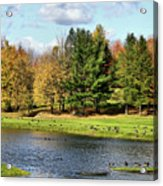 Geese Sanctuary Acrylic Print