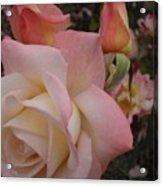 Gemini Rose Acrylic Print