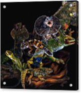 Gems And Jewels Acrylic Print