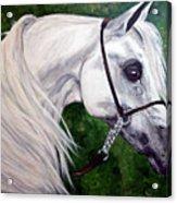 Gentle Arabian Acrylic Print