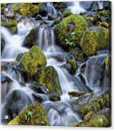 Gentle Cascade Acrylic Print