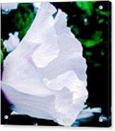 Gentle Floral Acrylic Print