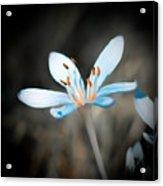 Gentle Acrylic Print