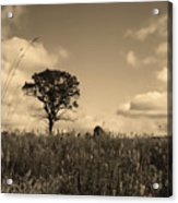 Gentle Landscape Acrylic Print