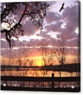 Gentle Morning In The Grove Acrylic Print