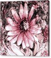 Gentle Thoughts Acrylic Print