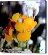 Gentle Yellow And White Acrylic Print