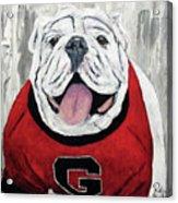 Georgia Bulldog Acrylic Print