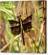 Georgia On My Mind Ray Charles Dragonfly Art Acrylic Print