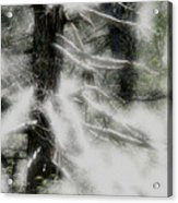 Georgia Pines Acrylic Print