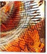 Georgia State Bird B Acrylic Print