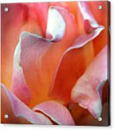 Georgias Rose Acrylic Print