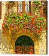Gerani Coloriti Acrylic Print