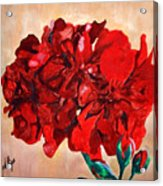 Geranium Bloom Acrylic Print